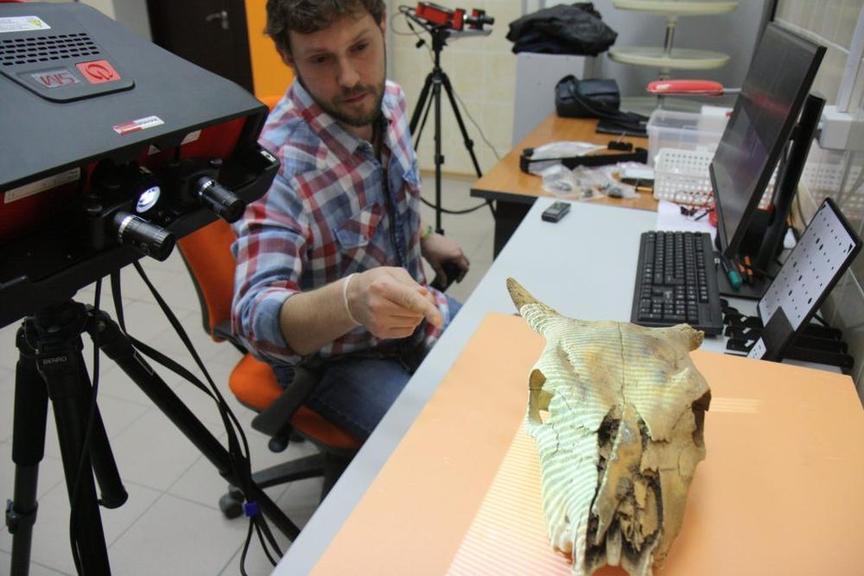 процесс трехмерного сканирования черепа животного