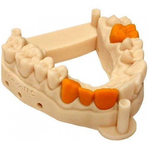 макет нижнего зубного ряда