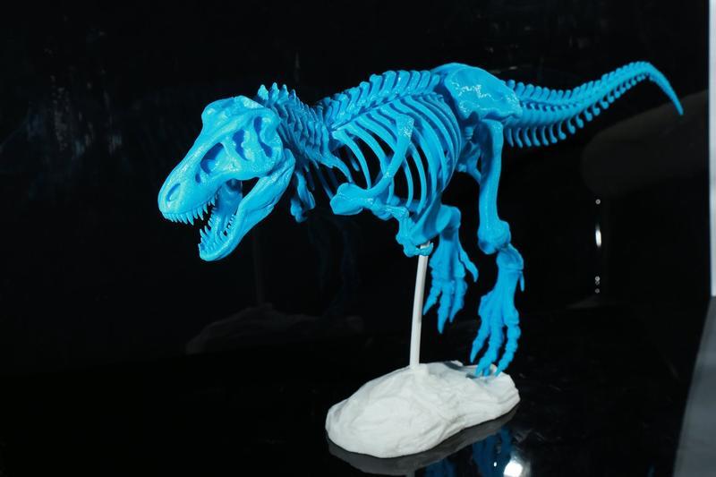 динозавр скелет