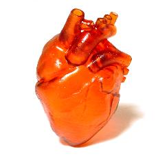 пример сердце на белом